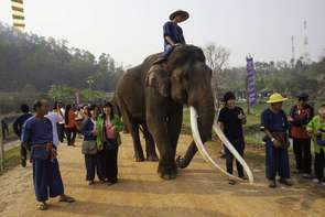Thais and others gather to offer food and prayers during Thailand's National Elephant Day.  According to officials there are about 3000 to 4000 elephants living in Thailand today with half of those being wild in national parks.