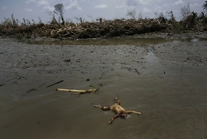 First Place - Will Baxter: The body of a child floats in the Pyapon River (Irrawaddy Delta), Burma, Thursday, May 8, 2008. Cyclone Nargis struck the Irrawaddy Delta region of Burma on May 4th/5th, leaving a path of destruction in its wake and killing approximately 130,000 people.
