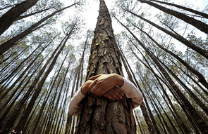A Nepalese pupil hugs a tree while celebrating World Environment Day at the forest of Gokarna, on the outskirt of capital Kathmandu, Nepal. 05 June 2014. A total of 2,001 people, including school children and representatives of various organization, hugged trees for about two minutes with the message to 'Save Environment–Save Trees' and to attempt to keep a Guinness World record. Nepal has an area of 147 181 km2, of which the forest area covers 37% of the total area.