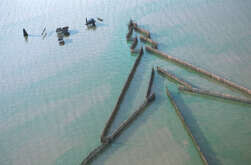 Pointed arrow fishing traps along a flooded forest at the Tonle Sap, or Great Lake of Cambodia.