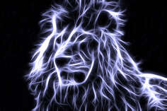 Leo, Latin: Panthera leo - kind of predatory mammals, one of the four members of the genus panther Latin: Panthera,