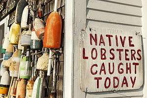 Fresh lobster sign on seafood shack.