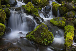 Creek with moss covered rocks near Sol Duc Falls on the Olympic Peninsula in the Olympic National Park in Washington State, USA.