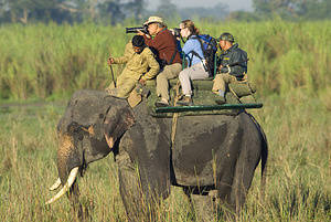 Tourists riding elephant-back take photos of animals in Kaziranga National Park. These early-morning elephant rides are a popular tourist draw. Kaziranga National Park is the oldest national park in the northeast Indian state of Assam. It was created a century ago as a forest reserve by British Viceroy Lord Curzon at the behest of his wife, to protect the Greater One-Horned Rhinoceros. Today the park is home to many endangered animals, including the rhino, tigers, elephants, wild buffalo, swamp deer and numerous bird species.